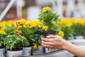 Ilustración de Cómo Elegir las Flores según su Color para el Jardín