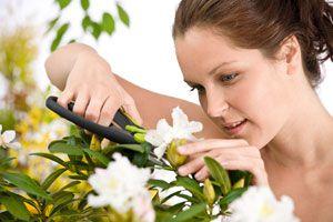 Ilustración de Como cortar las flores adecuadamente