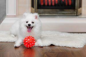 Ilustración de Cómo elegir juguetes seguros para perros