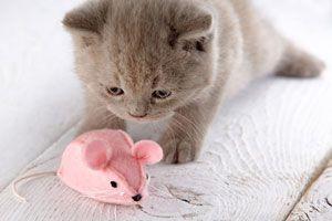 Ilustración de Cómo elegir juguetes seguros para gatos