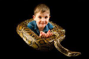 Ilustración de Cómo cuidar a las serpientes como mascotas