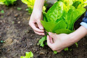 Ilustración de Cómo hacer una Huerta sin tener un Jardín amplio