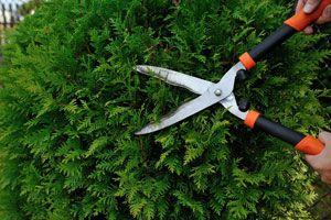 Ilustración de Consejos para Podar y Limpiar adecuadamente nuestras Plantas