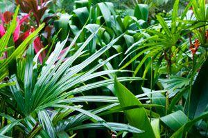 Ilustración de Cómo elegir Plantas para un Jardín de Estilo Tropical