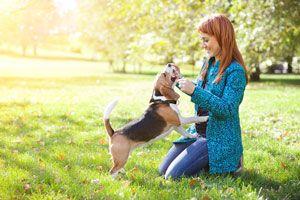 Ilustración de Cómo cuidar una Mascota luego de un Día al Aire Libre