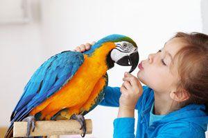 Ilustración de Cómo cuidar a los pájaros de mascota