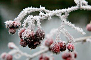 Cómo proteger las plantas de las heladas.