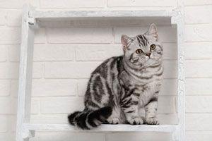 Ilustración de Cómo hacer estantes para gatos