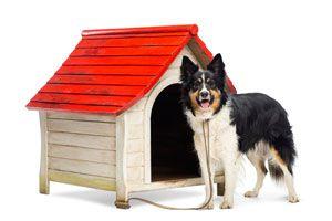Ilustración de Cómo preparar el canil del perro en invierno