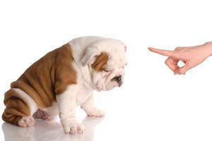 Ilustración de Cómo entrenar al perro para que esté dentro de la casa