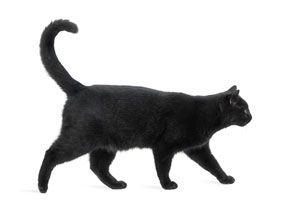 Ilustración de Cómo reconocer las supersticiones sobre animales