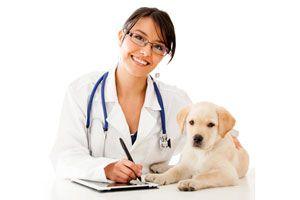 Ilustración de Cómo elegir a un nuevo veterinario