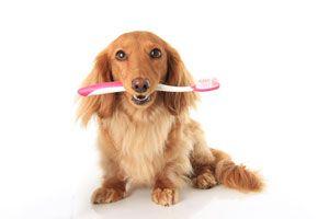 Ilustración de Cómo limpiar los dientes a perros y gatos