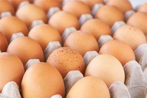 Ilustración de Cómo Cocinar Huevos