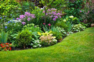 Ilustración de Cómo diseñar un jardín que necesite poco mantenimiento