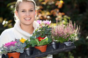 Cómo distinguir entre plantas vivaces y perennes