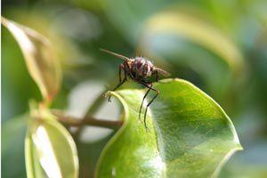Ilustración de Cómo eliminar plagas desconocidas del jardín