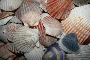 Ilustración de Cómo reparar conchas marinas para decoraciones