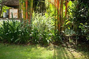 Ilustración de Cómo crear y mantener un jardín tropical