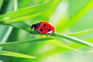 Cómo saber qué animales son buenos para el jardín
