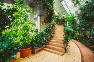 Plantas para dividir espacios del hogar. Como dividir ambientes del hogar utilizando plantas. Plantas divisoras de ambientes