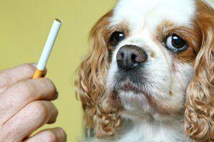 Ilustración de El humo del tabaco daña a las mascotas