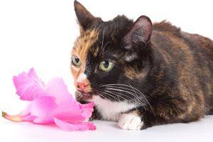 Ilustración de Cómo evitar la Alergia a los Gatos