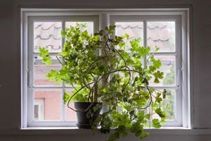 La importancia de la luz en las plantas de interior