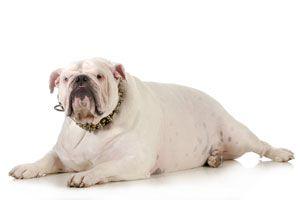 Ilustración de Cómo tratar a una mascota con sobrepeso