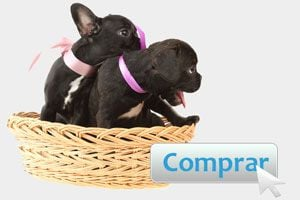 Ilustración de Consejos para comprar una mascota por Internet