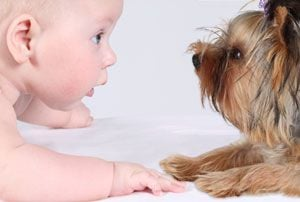 Ilustración de Cómo tratar al perro cuando llega un bebé