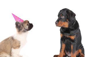 Ilustración de Cómo hacer que tu perro acepte a otro cachorro