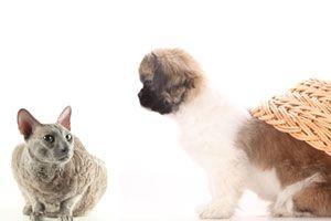 Ilustración de Cómo hacer que tu perro acepte a un gato