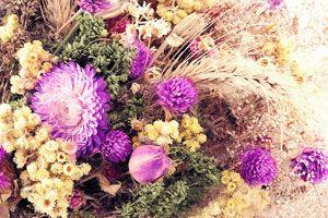 Ilustración de Cómo recolectar y secar flores silvestres