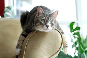 Ilustración de Cómo evitar que el gato arañe el sofá