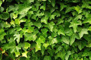 Ilustración de Plantas para combatir la humedad del hogar