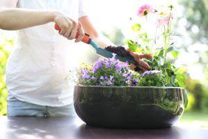 Ilustración de Cómo fertilizar las plantas con té