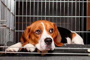 Ilustración de Cómo elegir una guardería canina