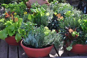 Ilustración de Cómo cultivar hierbas aromáticas dentro de casa