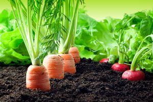 Ilustración de Cómo cultivar vegetales en casa
