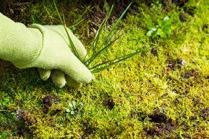 Ilustración de Cómo frenar las hierbas invasivas del jardín