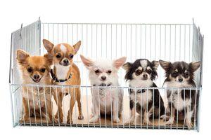 Ilustración de Cómo comprar un perro