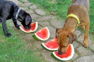 Ilustración de 7 alimentos que nunca debes darle a tu perro