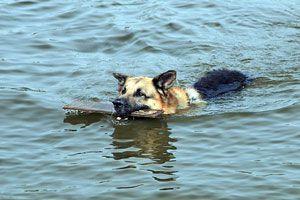 Ilustración de Cómo proteger a las mascotas en desastres naturales
