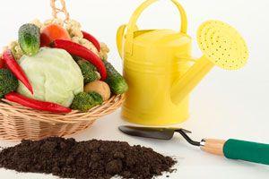 Ilustración de Cómo armar un kit de jardinería