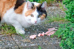 Ilustración de Alimentos Peligrosos para Gatos