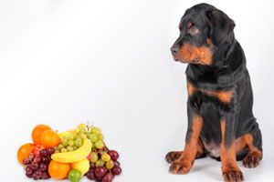 Por qué darle frutas al perro. Frutas que no debes darle de comer al perro.