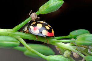 Tips para reconocer las plagas en plantas de interior. Cómo saber si las plantas de interior tienen plagas.