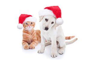 Ilustración de Cómo evitar accidentes con tu mascota en las fiestas