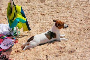 Ilustración de Qué llevar si vas de vacaciones con tu perro